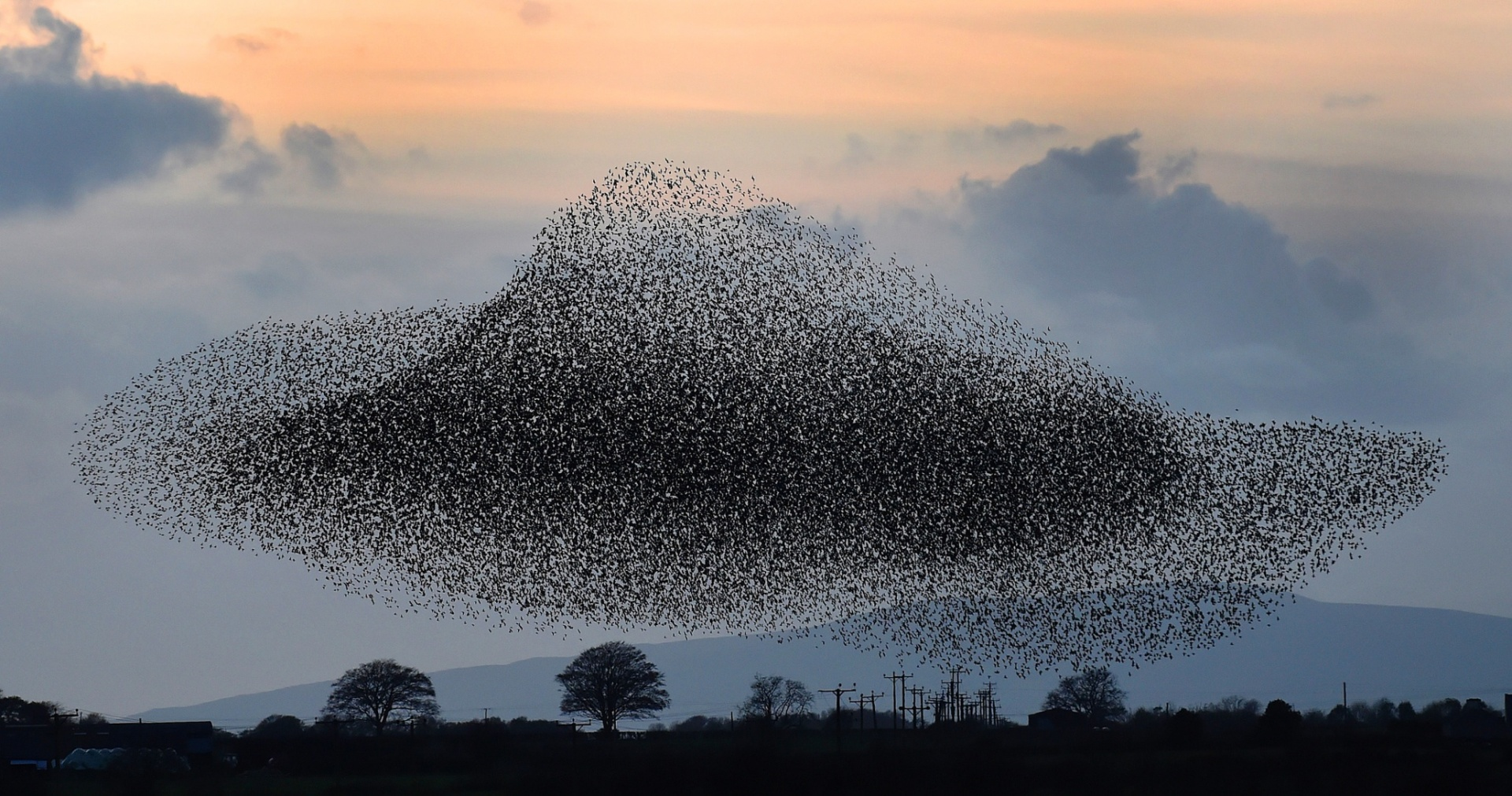 Innovation Is Murmuration